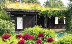 Siirtolapuutarhamökki, jonka katolla kasvaa kukkaniitty - pihalla uima-allas