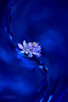 ~ Swinging Blue ~ by Jasna Matz on 500px
