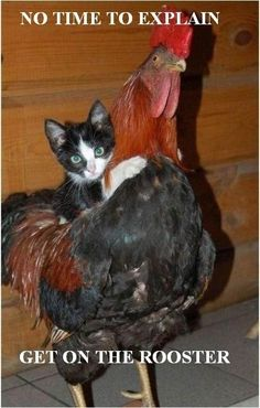 Does yo Momma know you is playing around in the hen house? :)