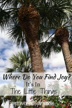 Where do you find joy? Is it in something small, something that catches your eye and suddenly takes your breath away? Or are you searching for something bigger, something more tangible and shiny? Are you reaching for something beyond the stars or do you feel it when you make it through a difficult day?