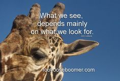Out of Africa wild life park, Arizona Out Of Africa, Wild Life, Arizona, Park, Quotes, Movie Posters, Movies, Flagstaff Arizona, Quotations