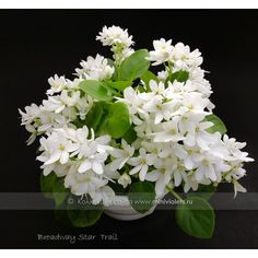 Small Plants, Indoor Plants, Pretty Flowers, White Flowers, Different Kinds Of Flowers, Saintpaulia, Star Trails, Beach Gardens, Begonia