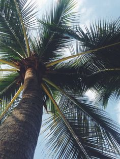 New Plants Background Wallpapers Palm Trees 21 Ideas Summer Feeling, Summer Vibes, Tropical Vibes, Tropical Paradise, Jolie Photo, Summer Of Love, Summer Baby, Summertime, Surfing