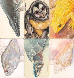 6 Phonecard / Tarjeta Telefonicas Venezuela Cantv  Fauna amenazada