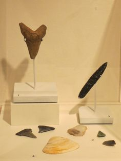 "Early Shaving Implements: Since the beginning of mankind, men have used a variety of tools to remove or trim facial hair. Using clam shells to pluck beard hair or shark teeth to scrape off the hair, ancient man did not enjoy the grooming luxuries afforded to modern man. The first ""disposable"" razors were made to sharp flint as early as 30,000 BC. Men in the New World used clam shells to pluck hair and Aztecs would create razors out of obsidian.  http://www.morrismuseum.org/current-exhibition..."