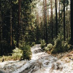 3,456 вподобань, 14 коментарів – Ellen Tyn (@liskin_dol) в Instagram: «So nervous and tired. Can't wait for the days when I'll be able to walk on the forest roads for…»