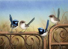 'Superb Blue Wrens', by Lyn Cooke www.artpublishing.com.au www.lyncooke.com Farm Paintings, Animal Paintings, Landscape Paintings, Australian Animals, Australian Art, Feather Art, Watercolor Bird, Bird Art, Beautiful Birds