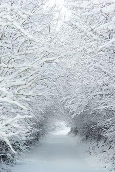 Winter wonderland snow tree tunnel