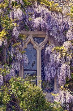 Gothic Windows covered with Pretty Wisteria Window Romantic Living. Beautiful home. Nature Aesthetic, Flower Aesthetic, Aesthetic Fashion, Beautiful Flowers, Beautiful Places, Beautiful Homes, Window Art, Window Boxes, Window Seats