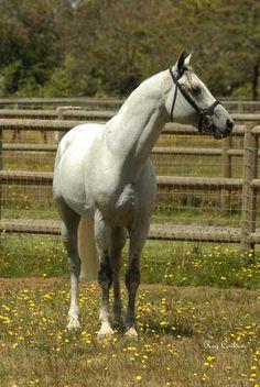 Mannhattan - Avalon Equine