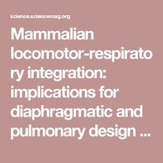Mammalian locomotor-respiratory integration: implications for diaphragmatic and pulmonary design | Science