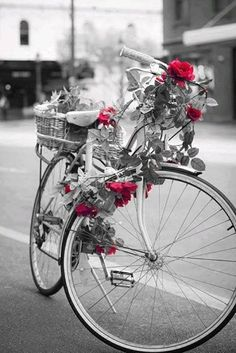 Black and white color splash photography Color Splash, Color Pop, Red Color, Splash Photography, Black And White Photography, Photography Flowers, Black White Red, Black White Photos, Deco Nature
