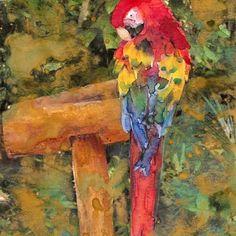 Red Parrot Tropical Bird Resting On Perch Fine Art Print