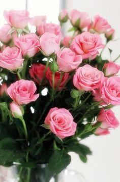 1000 images about pretty roses on pinterest pink roses. Black Bedroom Furniture Sets. Home Design Ideas