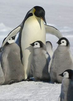 Awww , love me all !