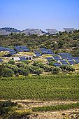 600-03906797 Vineyard Olive Grove and Solar Panels Tarragona Province Catalunya Spain