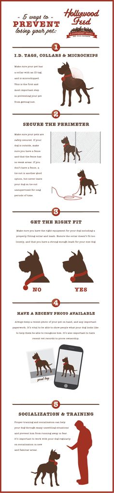 July is Lost Pet Prevention Month! Check out our infographic and blog post to make sure you're taking all the necessary precautions so your pet never gets lost!! http://www.hollywoodfeed.com/lost-pet-prevention-month/