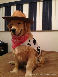 Halloween Costumes for your Pups - Hike n Dip Get your Pup dressed up for Halloween. Here are the best Pet Halloween Costumes. These Halloween Costumes for Dogs are cute, unique and adorable. Cute Dog Halloween Costumes, Best Dog Costumes, Golden Retriever Halloween Costumes, Funny Dog Costumes, Halloween Couples, Halloween 2019, Diy Dog Halloween Costumes, Happy Halloween, Pet Costumes For Dogs