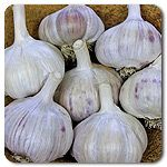 Organic Spanish Roja Garlic