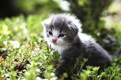 Our cat got five cute kittens. Here is one of them in our garden.     Awhh look :)