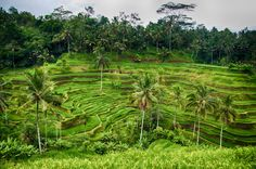 Photo Tegalalang Rice Terrace by Benjamin Grant on 500px