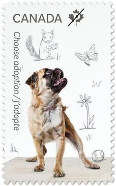 """The stamps in the Adopt a Pet collectionfrom Canada Post feature photographs of former shelter animals (including two adorable pups) and a doodle of each pet's imagined """"dream home."""""""