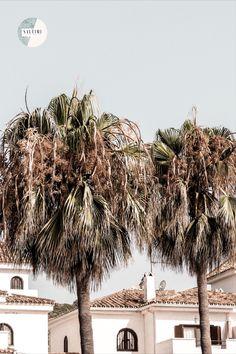 Andalucía ☀️ 🇨🇿Tyhle výhledy se nikdy neomrzí 🙈✨ Máte nějaké oblíbené místo, kam se rádi vracíte a nejraději byste tam už zůstali? 🙈🥰 #andalusianviews 🇬🇧Never get bored of these views 🙈✨ Do you have any favourite place you love to go back to and you want to never leave it anymore? 🙈🥰 #saltimi #saltimiboutique #ecoluxeboutique #ecoluxe #earthfriendly #neverendingsummer #summerinspired #palmtreeslover #palmtreeseverywhere #oceanlove #europeansummer #europeanstore #europeshipping Luxe Boutique, European Summer, Getting Bored, Andalucia, Palm Trees, To Go, Ocean, Inspiration, Palm Plants