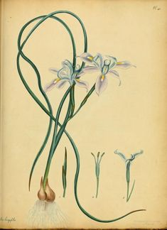 Botanist's repository, comprising colour'd engravings of new and rare plants only
