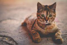 """""""O Grito do Bicho"""": Limpar a areia dos gatos pode ficar mais fácil"""