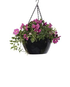 Viva Self-Watering Hanging Basket - Hanging Flower Baskets Petunia Hanging Baskets, Hanging Flower Baskets, Easy Fill, Make It Simple, Petunia Plant, Self Watering, Potting Soil, Garden Supplies, Petunias