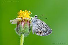 Natural Light Macro Photography … INDOORS   John Koerner's Official Blog