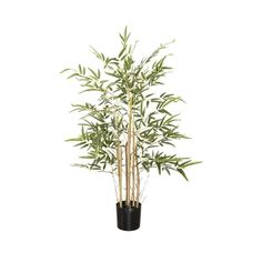With a size of 31'', it will create a relaxing and zen atmosphere, no matter which space you install it in. Moreover, this bamboo will stay green all year round and will require no maintenance, unlike natural bamboos. All Year Round, Green Plants, Artificial Plants, Decoration, Houseplants, Mini, Bamboo, Space, Create