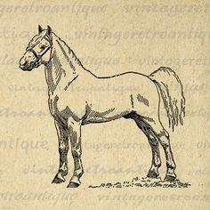 Printable Graphic White Pony Stallion Horse Image Illustration