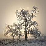 Trees in mist 작성자 Roksoff