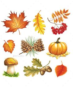 Autumn items painted markers on white background. You can use for greeting cards, posters and design projects Napkin Cards, Autumn Illustration, Coloring Tutorial, Gothic Halloween, Horse Drawings, Fall Wallpaper, Fall Cards, Autumn Inspiration, Pattern Paper