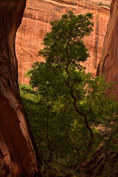 Reaching For The Light (Long Canyon, Utah) by Bill Stormont / 500px