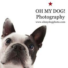 """Did someone say #dogpark? #ohmydogphotography #dogs #bostonterriersofinstagram #sandiegodog #itsadogslife #dogsofinstagram"" Photo taken by @ohmydogphoto on Instagram, pinned via the InstaPin iOS App! http://www.instapinapp.com (02/18/2015)"