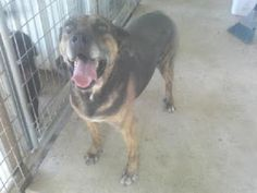Adopt a dog who has lived in a shelter a long time! Buffalo, MO