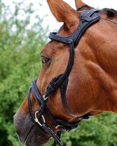 What's everyone's thoughts on the new anatomical @stuebben_eu bridle ? #stuebben #englishriding #hevonen #kwpn #ridsport #ponni #ponyofinstagram #reitsport #cheval #pferdeliebe #reiten #connemarapony #horse #pferd #equestrianlife #warmblut #equestrianstyle #dressyrhäst #rootd #equestrian #häst #hengst #ausreiten #stute #equestrianism #dressyr #hanoverian