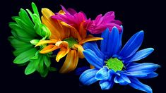 Free images about A Rainbow Daysies - MobDecor Beautiful Good Morning Wishes, Good Morning Song, Good Morning Picture, Morning Pictures, Good Morning Images, Over The Rainbow, Flower Photos, Flower Crown, Trees To Plant