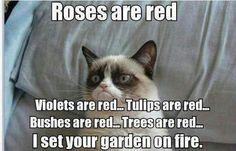 heh heh heh typical angry cat