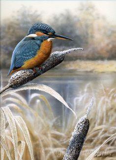 Kingfisher by lake on frosty bullrush Kingfisher Tattoo, Kingfisher Bird, Exotic Birds, Colorful Birds, British Wildlife, Wildlife Art, Pretty Birds, Beautiful Birds, Bird Barn