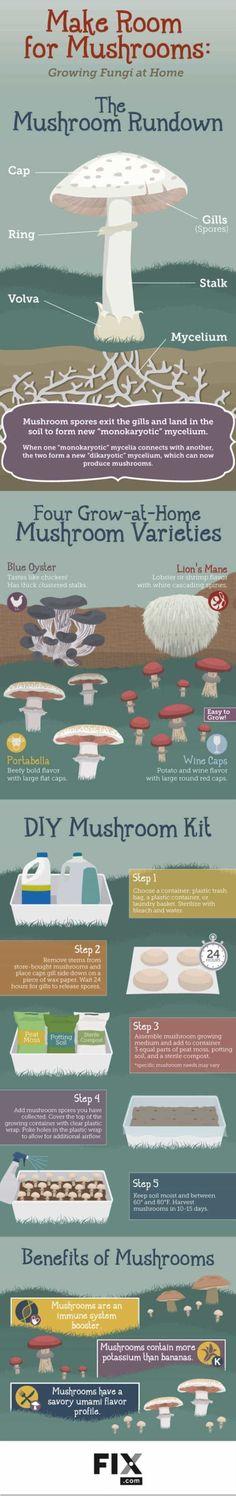 Guide To Growing Mushrooms At Home [Infographic] Check out Easy Guide To Growing Mushrooms At Home [Infographics] at /.Check out Easy Guide To Growing Mushrooms At Home [Infographics] at /. Grow Your Own Mushrooms, Growing Mushrooms At Home, Garden Mushrooms, Hydroponic Gardening, Hydroponics, Container Gardening, Aquaponics Plants, Hydroponic Growing, Mushroom Varieties