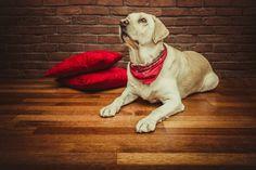Psy lubią komfort i wygodę :-)