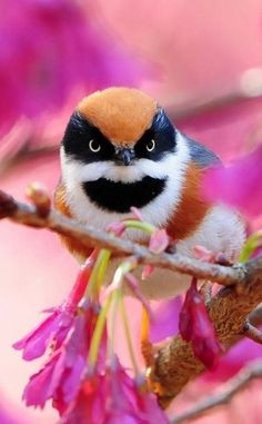 .I absolutely love the colors. And birds are cool too!