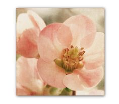 Pink Flower Photo, pale, fine art, flower print, wall decor, pink flower photograph, dusty rose, peach, pale pink,123team, spring