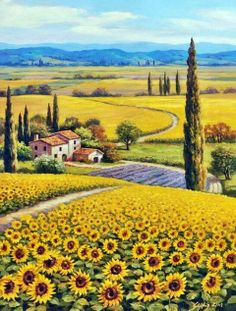 The Golden Hills Of Tuscany ~ Sung Kim