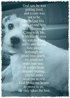 sympathy quotes for loss of dog image quotes, sympathy quotes for loss of dog quotes and saying, inspiring quote pictures, quote pictures Pet Loss Quotes, Losing A Dog Quotes, Eye Quotes, Losing A Pet, Lost Dog Quotes, Pet Loss Grief, Loss Of Dog, I Love Dogs, Puppy Love