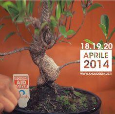 Pasqua con Bonsai Aid Aids: dal 18 al 20 aprile tremila banchetti in tutta Italia per la lotta contro l'AIDS