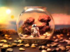 Des terrariums Star Wars